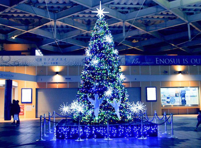 ヒカリノエノスイを彩るクリスマスツリーたち