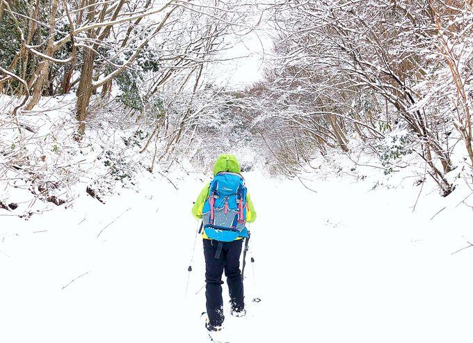 スノーシューで大江山の雪景色を楽しもう