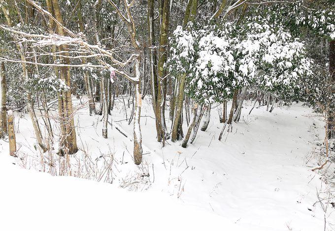 雪の中の植物にも注目しよう