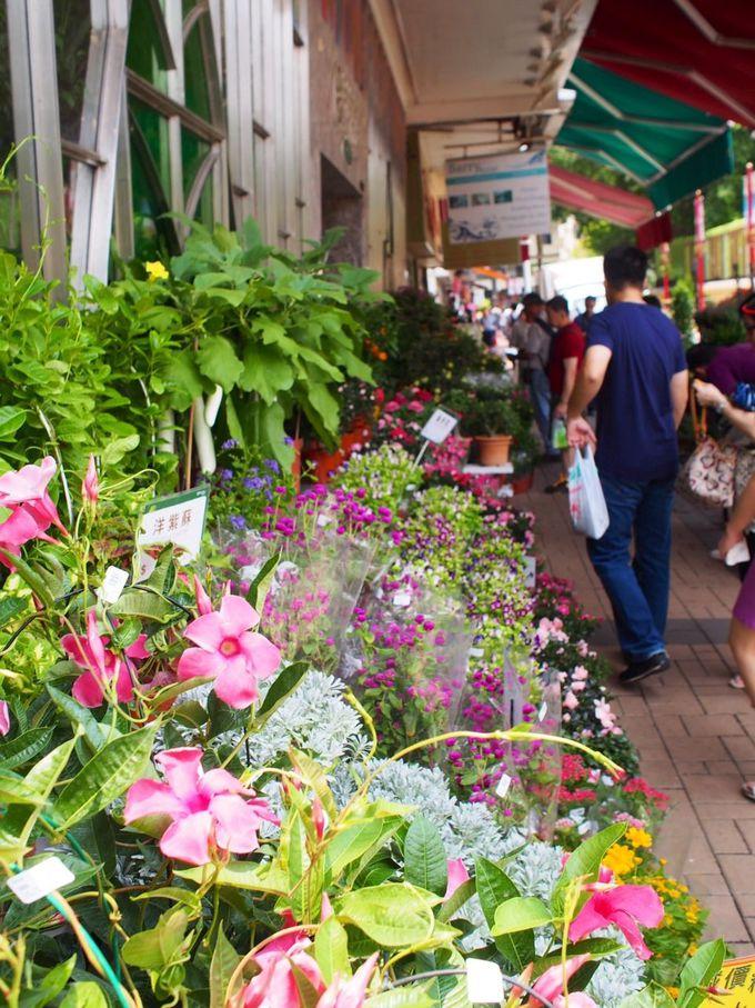季節の花が咲き乱れる、華やかな「花墟道(フラワーマーケット)」