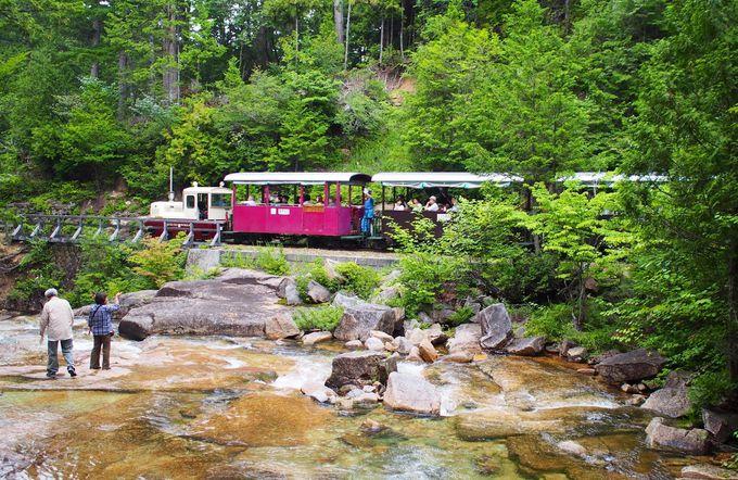 遊歩道から森林鉄道を眺める