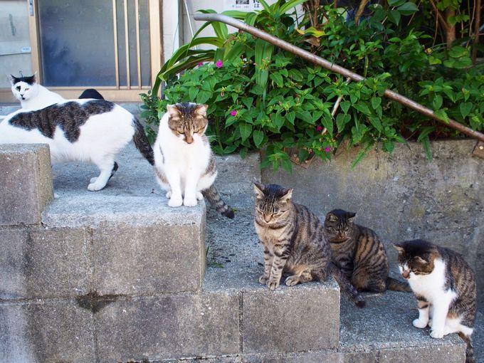 いたいた!たくさんの猫達。