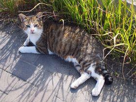 ネコ好きにおすすめ!博多から日帰り可能なネコ島「藍島」へ行こう!