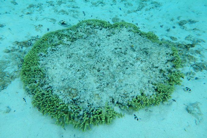 美しいサンゴと熱帯魚を楽しむポイント【2】