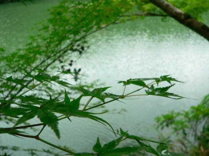 四季の移り変わりを演出する「みどり池」