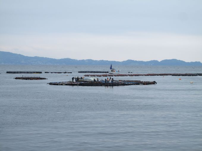 手ぶらで楽しむ「釣り体験!!」海上釣り堀「太公望」って?