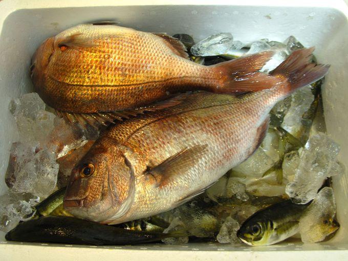 フィニッシュは自分で釣った魚に舌鼓