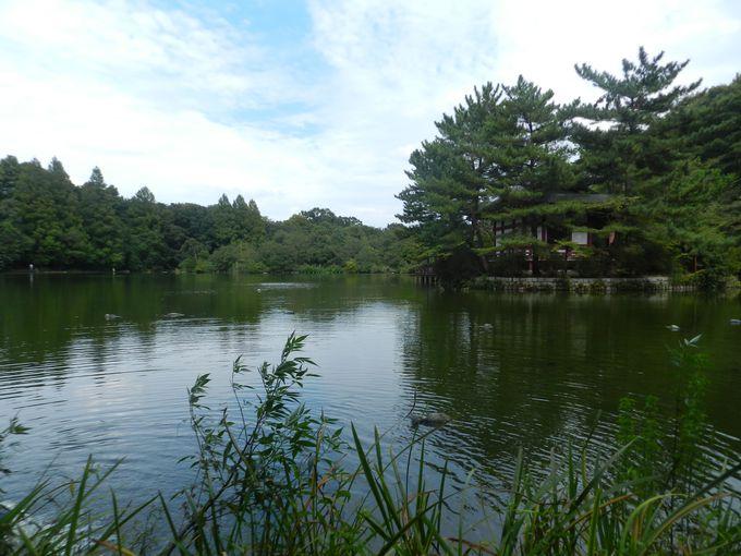 〜石神井の水景〜「遊び」と「癒し」の2つの池をぐるりと廻ろう!