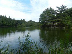 池袋から25分!石神井公園で東京に残る自然に親しもう