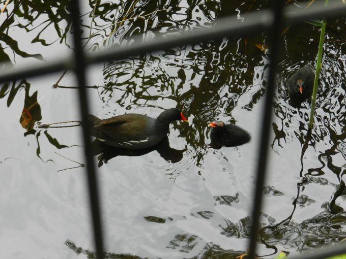 〜石神井の生物〜水と緑の景観に暮らす生きものたちを探そう!