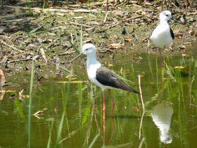 東京から一番近い水鳥の国!初夏の「谷津干潟」は渡り鳥達の楽園