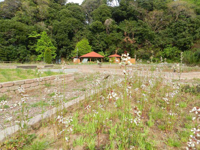 ハーブ園は関東有数の規模。豊潤な香りを楽しもう!