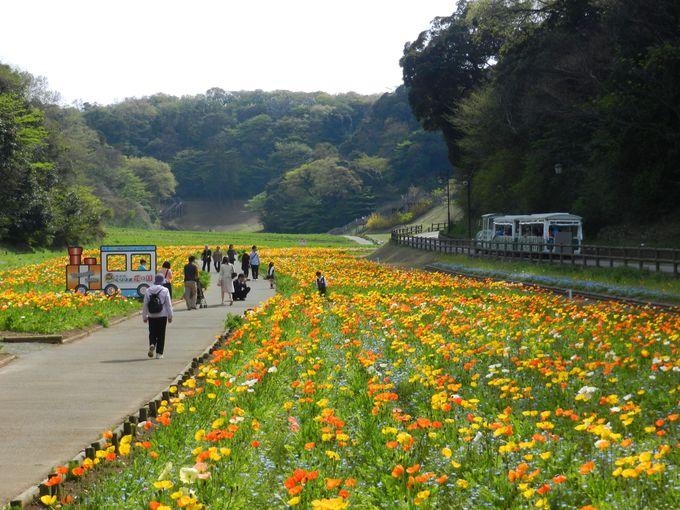 フラワートレインに乗って、心地よく花景観を楽しもう!