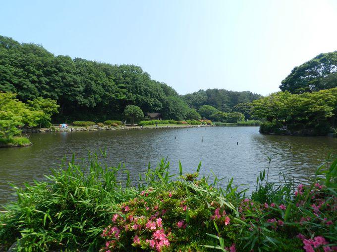 住宅地に囲まれた森と、木々に囲まれた2つの池が最大の見所!