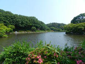 ミニ動物園もある自然公園。週末はカワセミのすむ横浜・大池公園へ!
