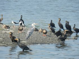 羽田空港が目と鼻の先!東京湾の鳥の楽園「東京港野鳥公園」に行こう