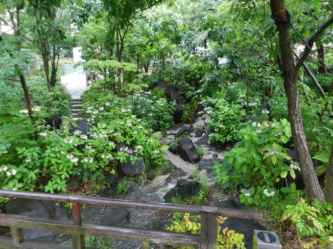 池に注ぎこむ滝の流れ……在りし日の渓流景観を園内に再現!