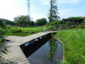 広大な田んぼと隣り合う神奈川県藤沢市・引地川親水公園へ!
