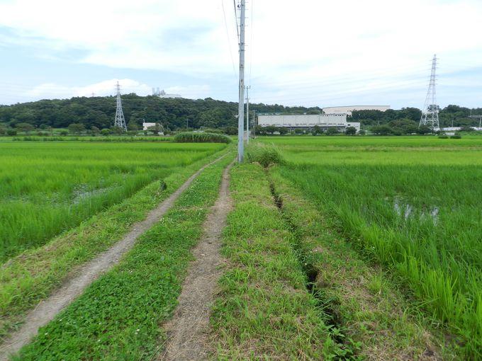 見渡す限りの水田地帯を散歩しよう(熱中症注意)