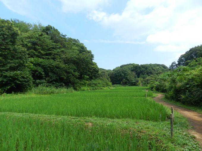 青空の下で、開放的な田んぼを歩いてみよう