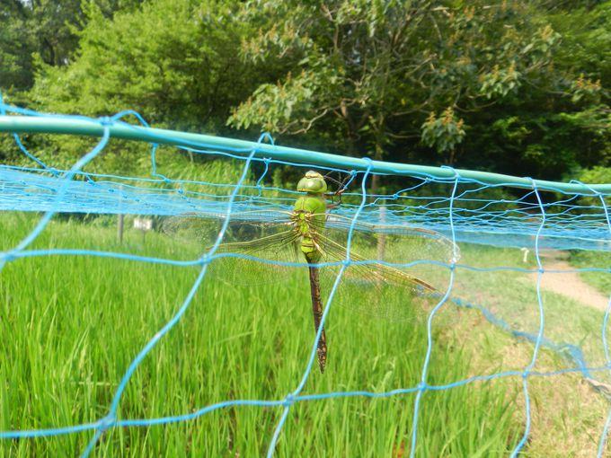 春〜秋の舞岡公園は、昆虫たちの楽園です