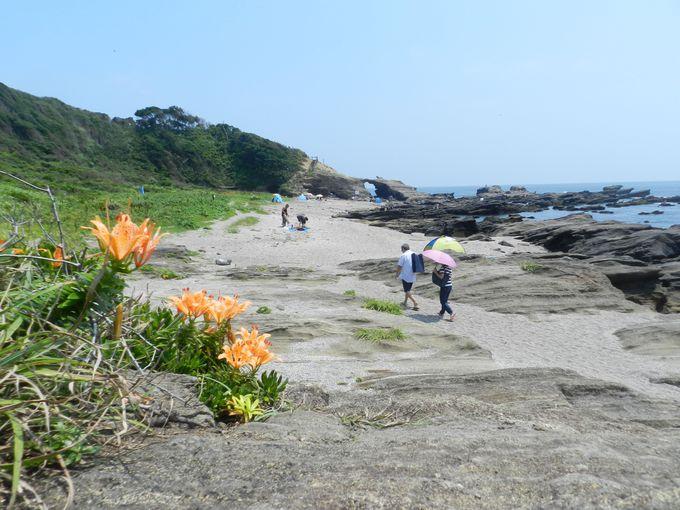 南海岸部のハイキングコースを歩き、城ケ島の自然を堪能しよう