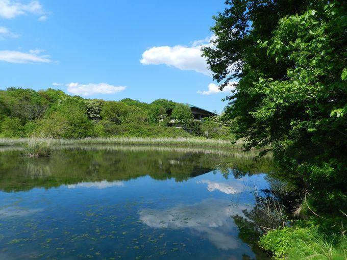 豊かな武蔵野の森林に囲まれた、水と緑の自然公園です