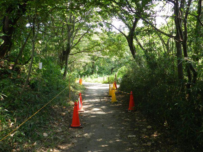 スズメバチは駆除するのでなく「近付かない」のが公園の方針