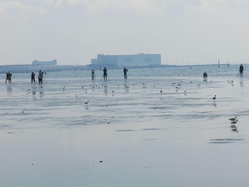 「超」至近距離で水鳥を撮影できる船橋市・三番瀬をご案内!