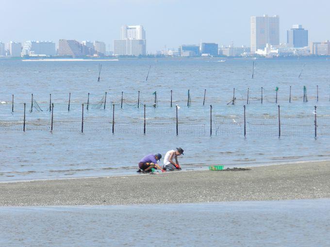 臨海副都心を間近に望む、貴重な自然地です
