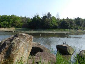 東京都東端の「葛西臨海公園」でバードウォッチングを満喫しよう