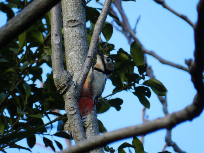 園路沿いの林にも目を向けて、小鳥を探してみよう