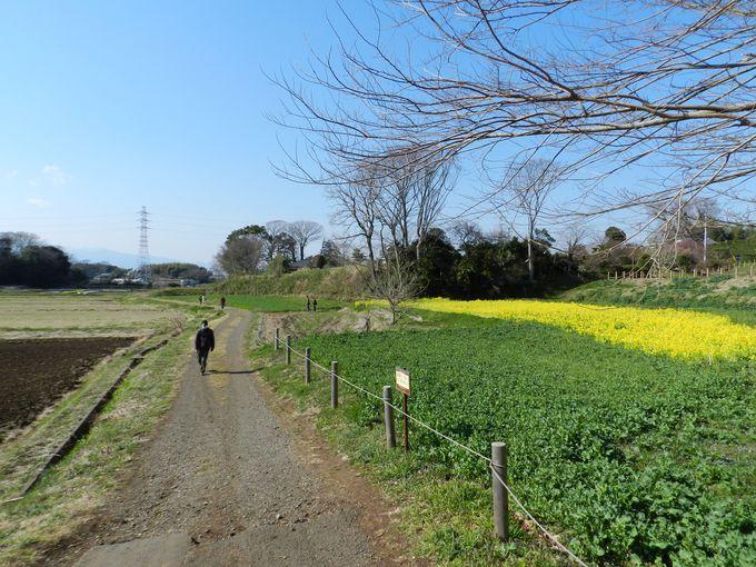 広々とした田畑に隣接する開放的な園路