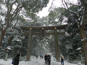 オシドリもくる東京 渋谷区の自然地。冬の明治神宮に行こう