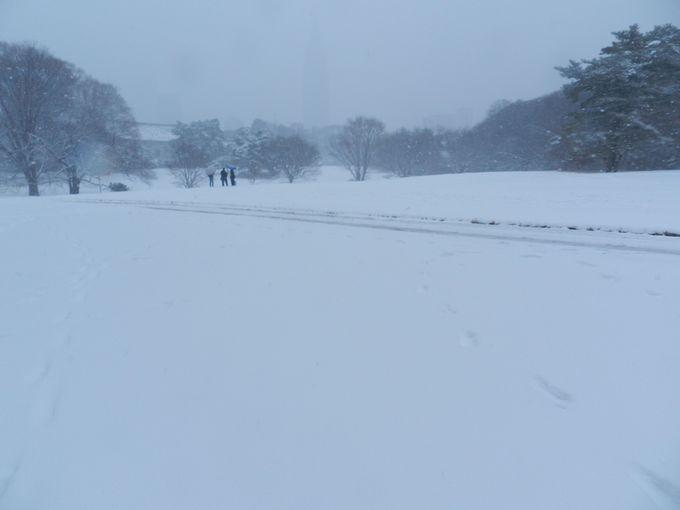 雪が降れば、一面の白銀世界に……