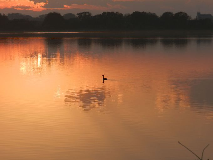 夕暮れの渡良瀬遊水地は……