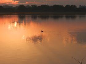 冬の渡良瀬遊水地は、水鳥と猛禽が暮らす関東屈指の楽園!