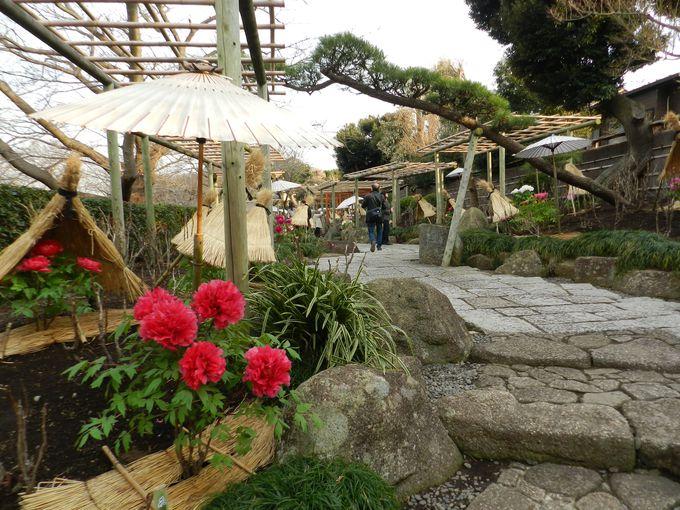 真冬限定オープン。『神苑ぼたん庭園』は要チェック!