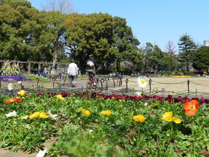 【ついでに散歩】春の日比谷公園を見てみよう