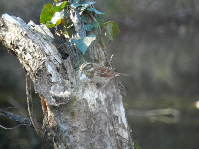 園内を歩き回って、鳥の生物多様性を実感しよう