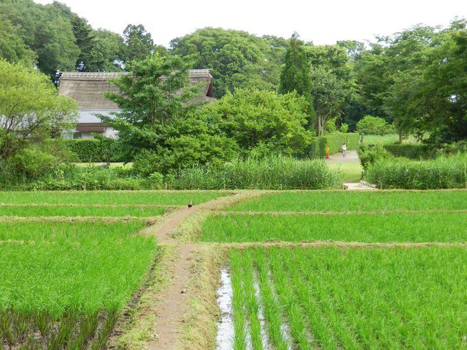 深緑に包まれる真夏の里山で、かつての農村風景にほっこり