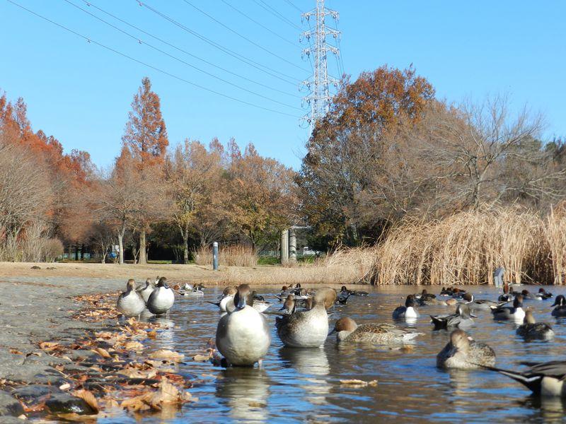埼玉県・見沼自然公園でたくさんの四季の生きものに出会う旅