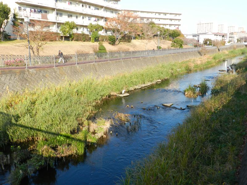 自然護岸が美しい横浜・いたち川沿いを歩き、四季を楽しもう