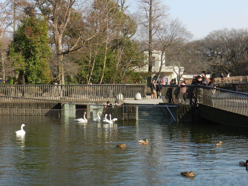 関東の水辺の生きものが集結! 井の頭自然文化園 水生物園
