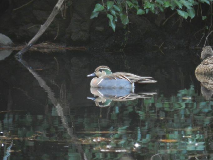 新宿真っ只中なのに、時にはこんな珍鳥が訪れることも!