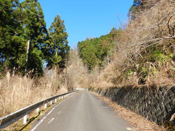 車両進入禁止につき、山歩きと鳥探しを安心して楽しめます