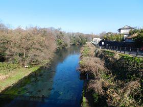 静岡県・三島駅発、美しい湧水の街で多彩な「水」に出合う旅
