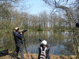 埼玉県荒川流域の秋ヶ瀬公園でヒレンジャクを探そう