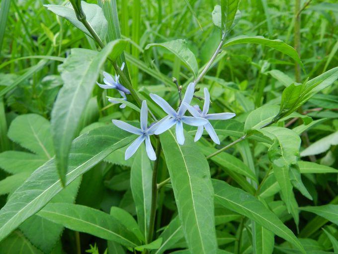 初春から晩秋まで、四季折々の山野草が代わる代わる花開く!
