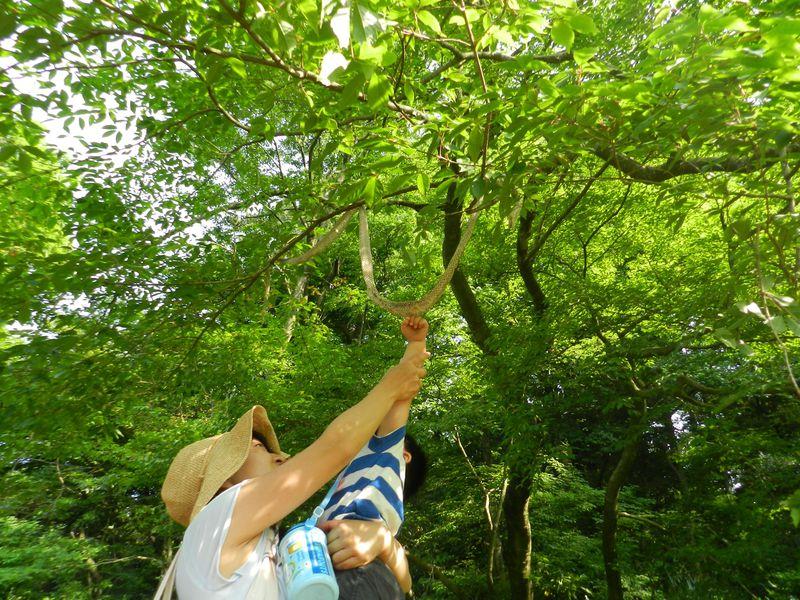東京・目黒 緑のオアシス「目黒自然教育園」を散策しよう